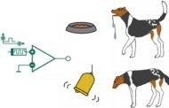 شرطی سازی کلاسیک : آزمایش های ایوان پاولف با سگها
