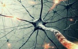 مطالعه مبانی فیزیولوژیک روانشناسی