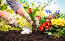 برای زندگی دلخواهتان مثل برنامه ریزی برای یک باغچه زیبا، برنامه ریزی کنید