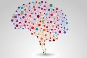 اختلال شخصیتی مرزی : شدیدترین اختلال شخصیتی که در آن فعالیت قسمتی از مغز که به همدلی مرتبط است، تضعیف میشود.