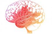 زبان و تفکر چگونه بر یکدیگر تاثیر میگذارند؟