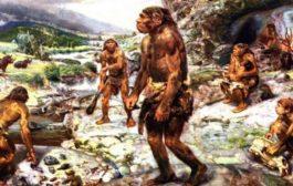 انسان نئاندرتال (Homo neanderthalensis)