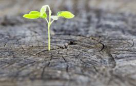 رواندرمانی مثبت: مبانی نظری، اصول و راهبردهای درمانی