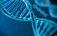 حافظه و رمزگردانی گزینشیِ تجارب در مطالعه موردی جالبِ آزمایشگاه جان گبریلی