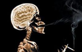 سبک زندگی غلط، حجم مغز را کاهش می دهد