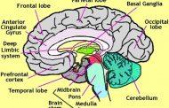 روانشناسی عصب نگر (نوروسایکولوژی): تعریف، روشها و ابزارهای اندازهگیری
