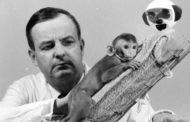 آزمایش میمون های هارلو