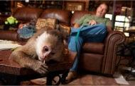 گوآ و دونالد مثل دو برادر در یک محیط، آیا شمپانزهها زبان انسان را یاد میگیرند؟