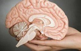 نوجوان دارای مغزی است که دنیا را به طور متفاوتی پردازش میکند