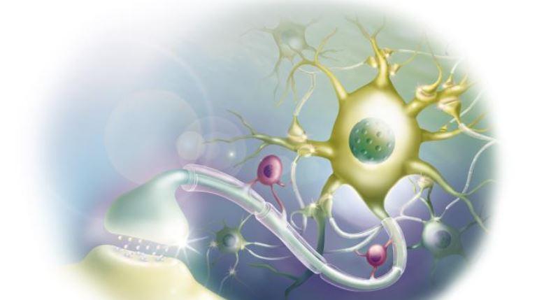 نورون و ساختار آن