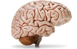 تقویت مغز با روشهای ساده