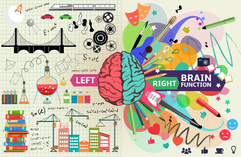 هر یک از نیمکره های مغزی وظایف خاصی را انجام میدهند.