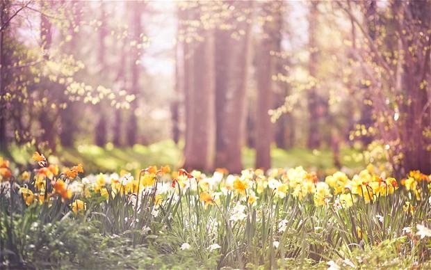بهار/مراقبه کوهستان
